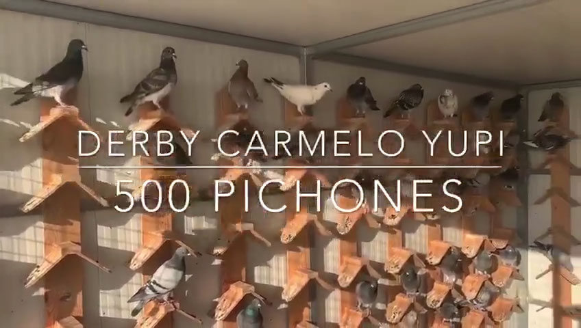 ¡ Ya tenemos 500 pichones ! ;)